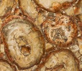 Technisches Detail: PETRIFIED WOOD BROWN Namibia polierte Natur, Halbedelstein