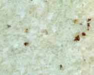Technisches Detail: WHITE TYPE ROMANO Brasilianischer polierte Natur, Granit