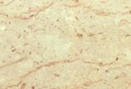 Technisches Detail: PERLATO SICILIA  F Italienischer polierte Natur, Marmor