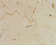 Technisches Detail: TRANI FIORITO CHIARO Italienischer polierte Natur, Marmor