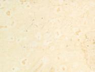 Technisches Detail: AJLOUN BRIGHT Jordanischer polierte Natur, Kalkstein