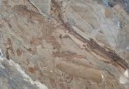 Technisches Detail: ILLUSION BRONZE Türkischer polierte Natur, Marmor