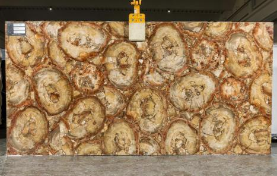 PETRIFIED WOOD BROWN polierte Unmaßplatten TL0142 aus Natur Halbedelstein , SL2CM: Lieferung Veneto, Italien